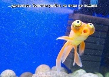 http://s8.uploads.ru/t/EU4bI.jpg