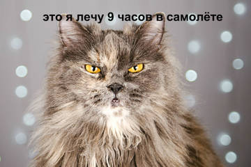 http://s8.uploads.ru/t/i3tOR.jpg