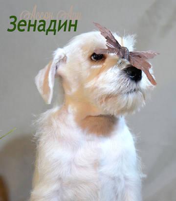 http://s8.uploads.ru/t/o374C.jpg