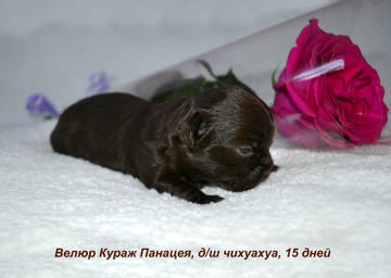 http://s8.uploads.ru/t/zLTVb.jpg