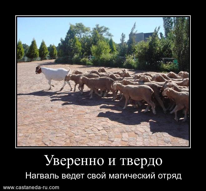 http://s8.uploads.ru/uAXOb.jpg
